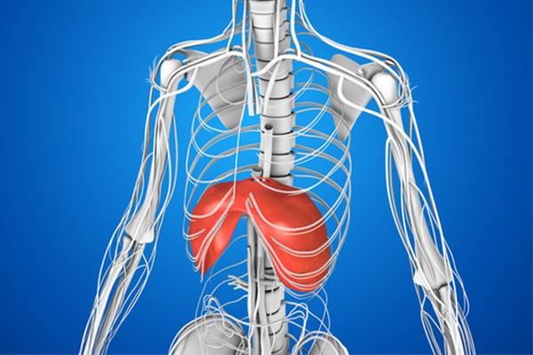 横隔膜の役割とは?正しい呼吸を行うための鍛え方とトレーニング方法
